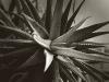 5112-cactus-with-itty-bitty-dark-bw-copy