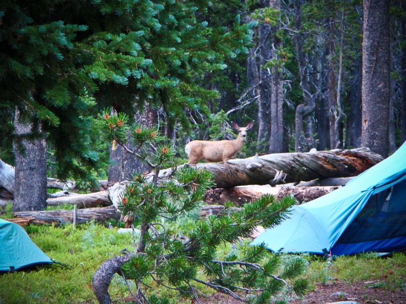 Wind River Range Camping
